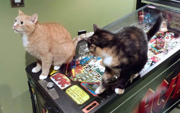 cats playing pinball