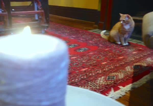 Challenge Yourself Beginner Meditation Cats