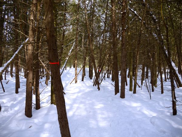 Winter Hibernot Horseshoe Resort Snowshoe Trail Marker