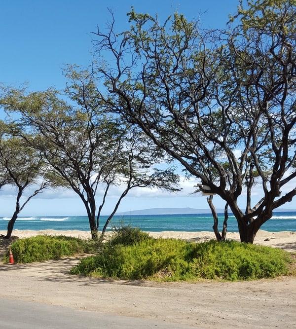 Family-Travel-Maui-like-a-Local-Road-Trip