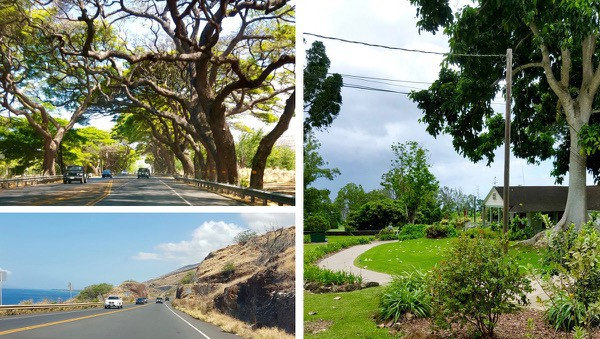 family-travel-Maui-like-a-local-road-trip2