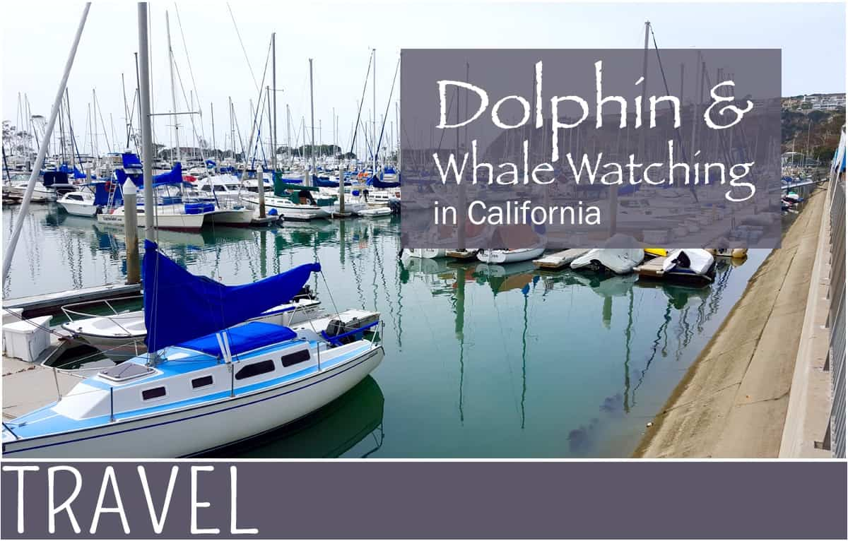 Family-Travel-Whale-Watching-in-Californa-Adventure