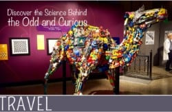 Family-Travel-Science-Behind-Ripleys-Exhibit