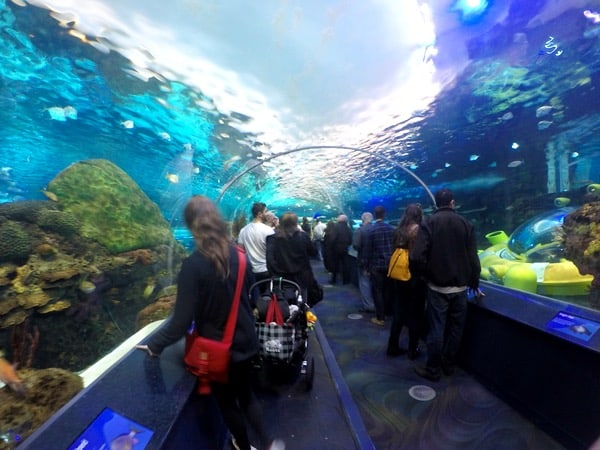Family-Travel-Toronto-Aquarium-Tunnel