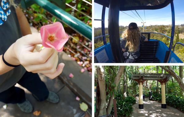 family-travel-san-diego-zoo-skysafari image