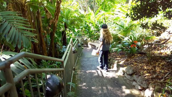 family-travel-san-diego-zoo-walkways image