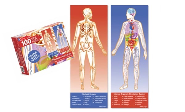 travel education kindness packing with purpose anatomy materials
