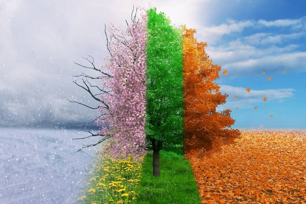 Image result for 4 seasons