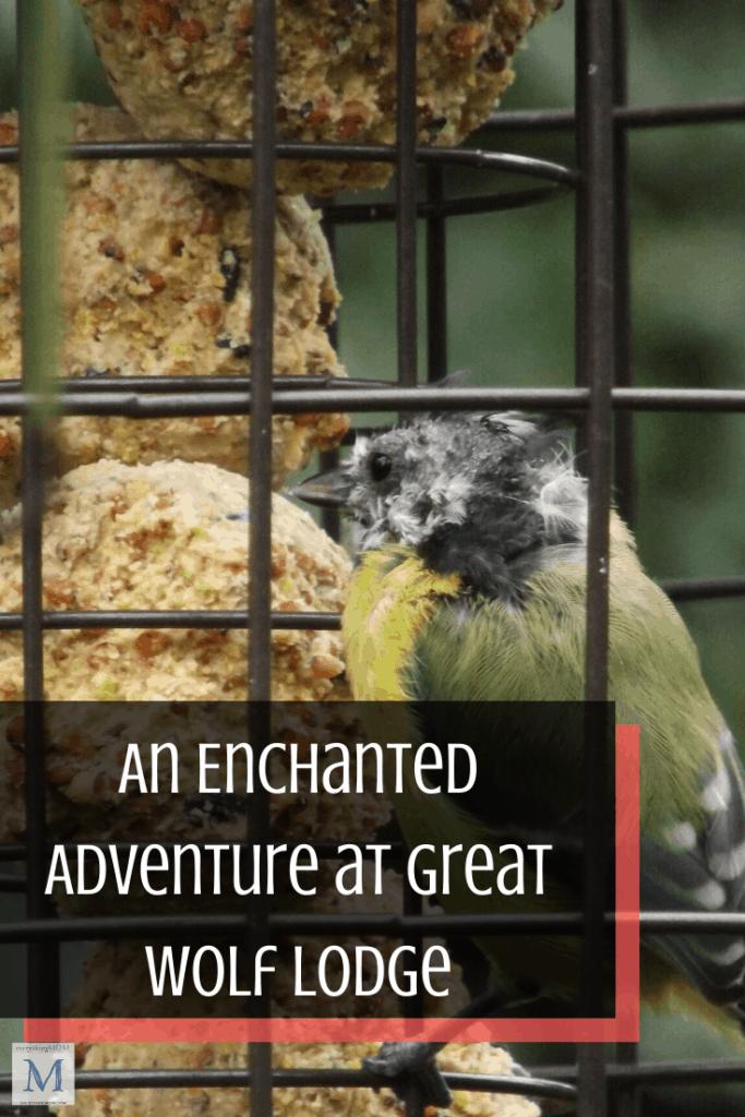 Kids Craft Ideas: Homemade Bird Feeder